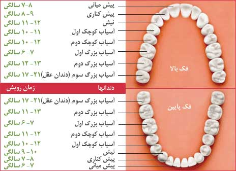 کار دندان آسیاب بزرگ